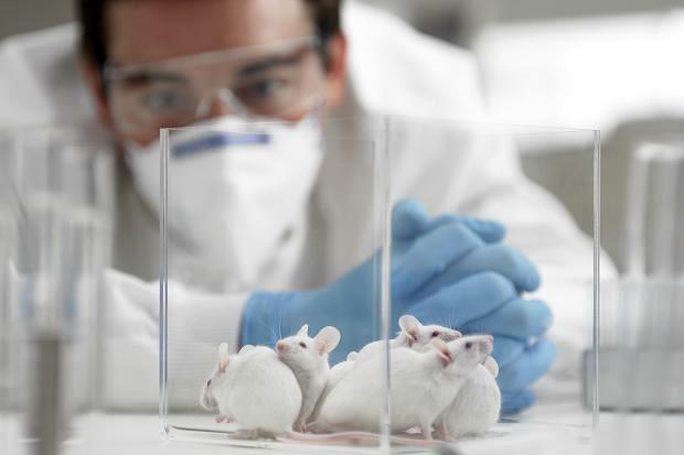 испытания на мышах
