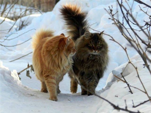 новогодние приметы о кошках