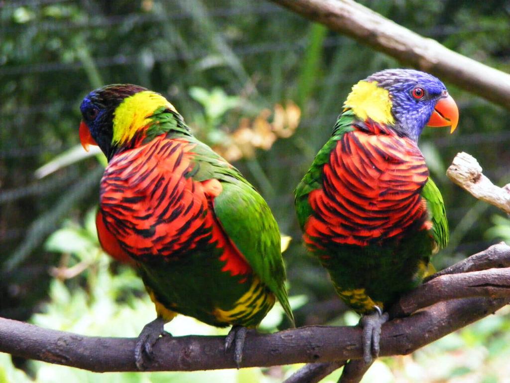 фото одинаковые попугаи