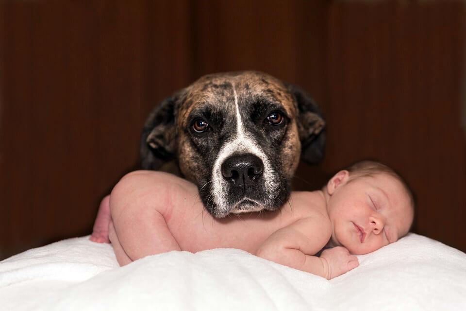 дети в год Собаки