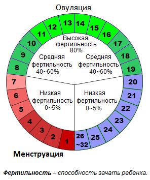 график зачатия