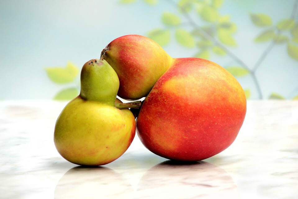 генетика яблоко от яблони фото