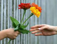 цветы как подарок
