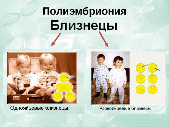 монозиготные и дизиготные