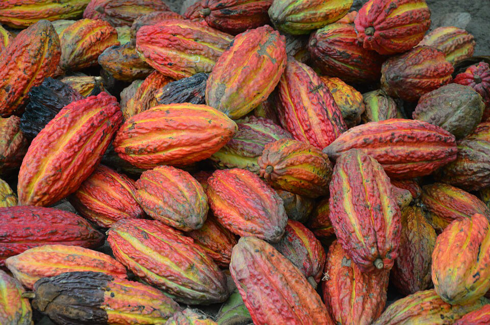 фото какао бобы и шоколад