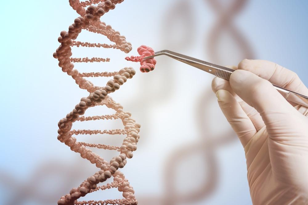 генетика как появляются близнецы